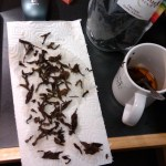 I went searching through a cup of Organic Dark Oolong, and couldn't find an in-tact two leaves and a bud.