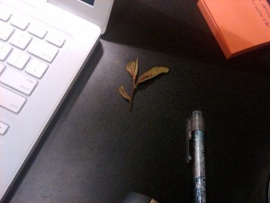 I spend part of the day searching for two leaves and a bud, and then Richard plunks this one down on my desk from his cup of white tea. Typical.
