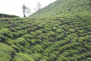 The Hills of Darjeeling