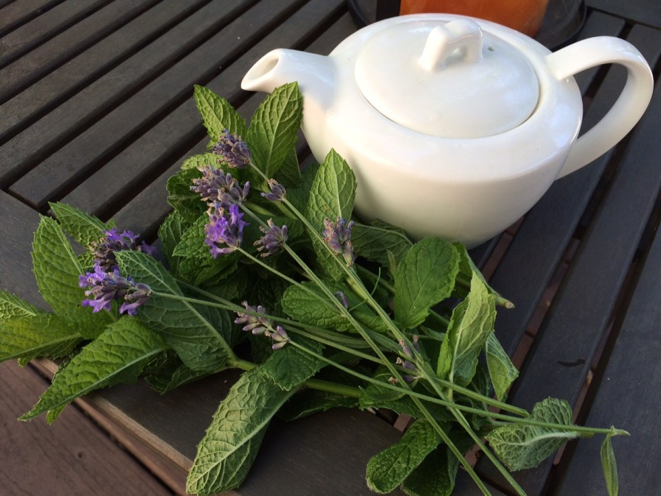 When life gives you mint and lavender ... brew tea.