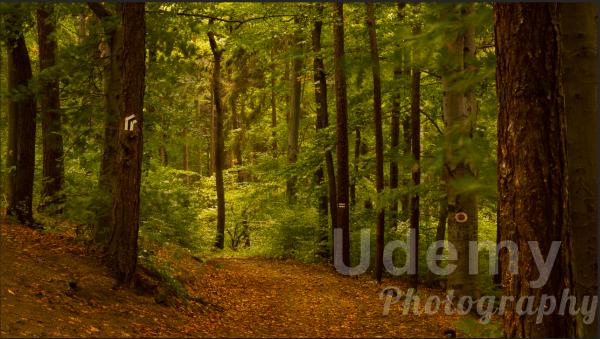 udemyphotography2.jpg