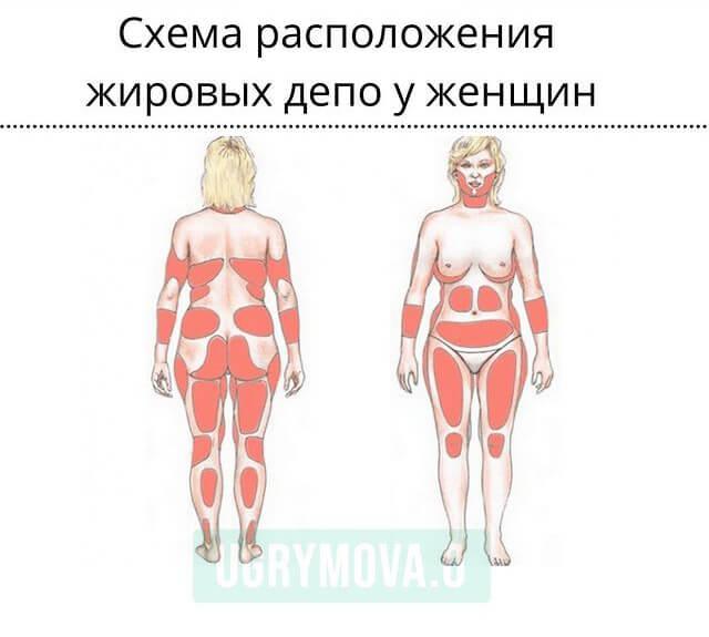 схема расположения жировых депо у женщин