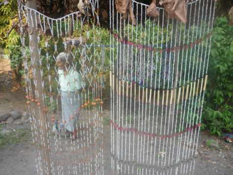 Thorn and seed curtains