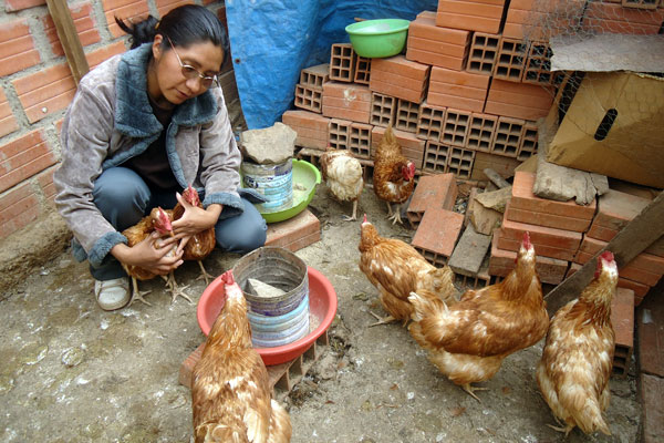 Florencia tends to her hens.