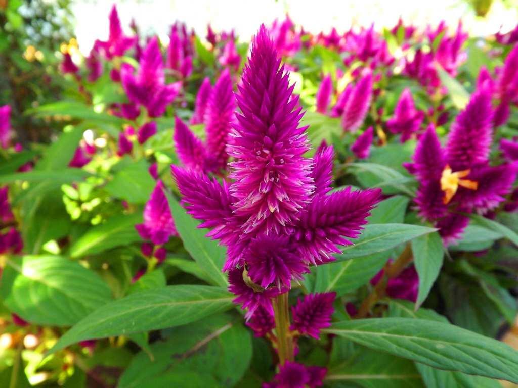 planta silvestre venenosa