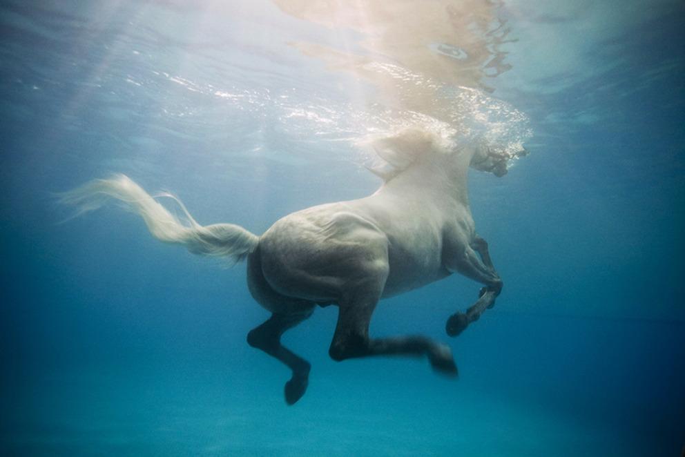 Cavallo in piscina