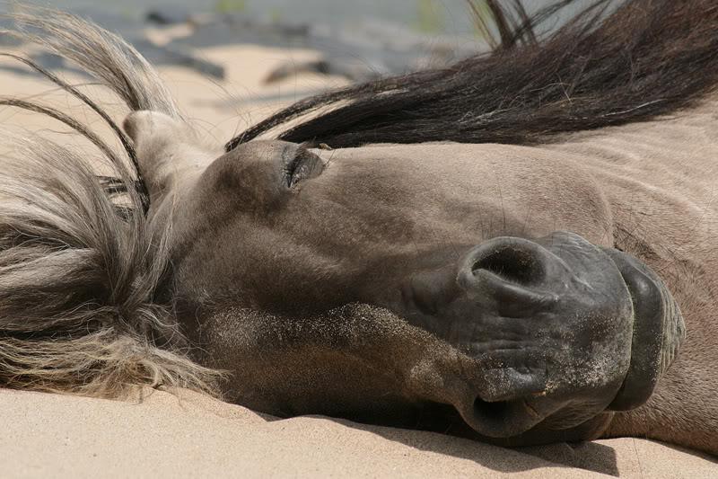 Sognare Un Cavallo In Casa  Perfect Nel Mondo Di Oggi Dove