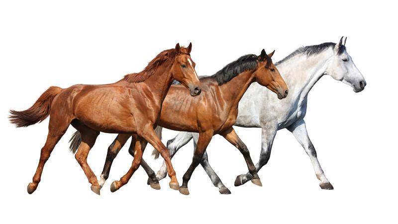disagio del cavallo blog 2018