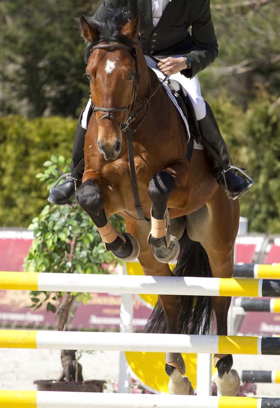 Cavallo in concorso