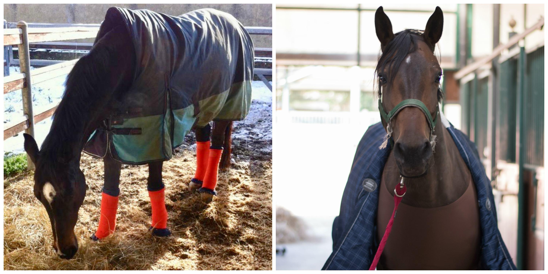 Overblanketing: la cattiva abitudine di coprire troppo i cavalli