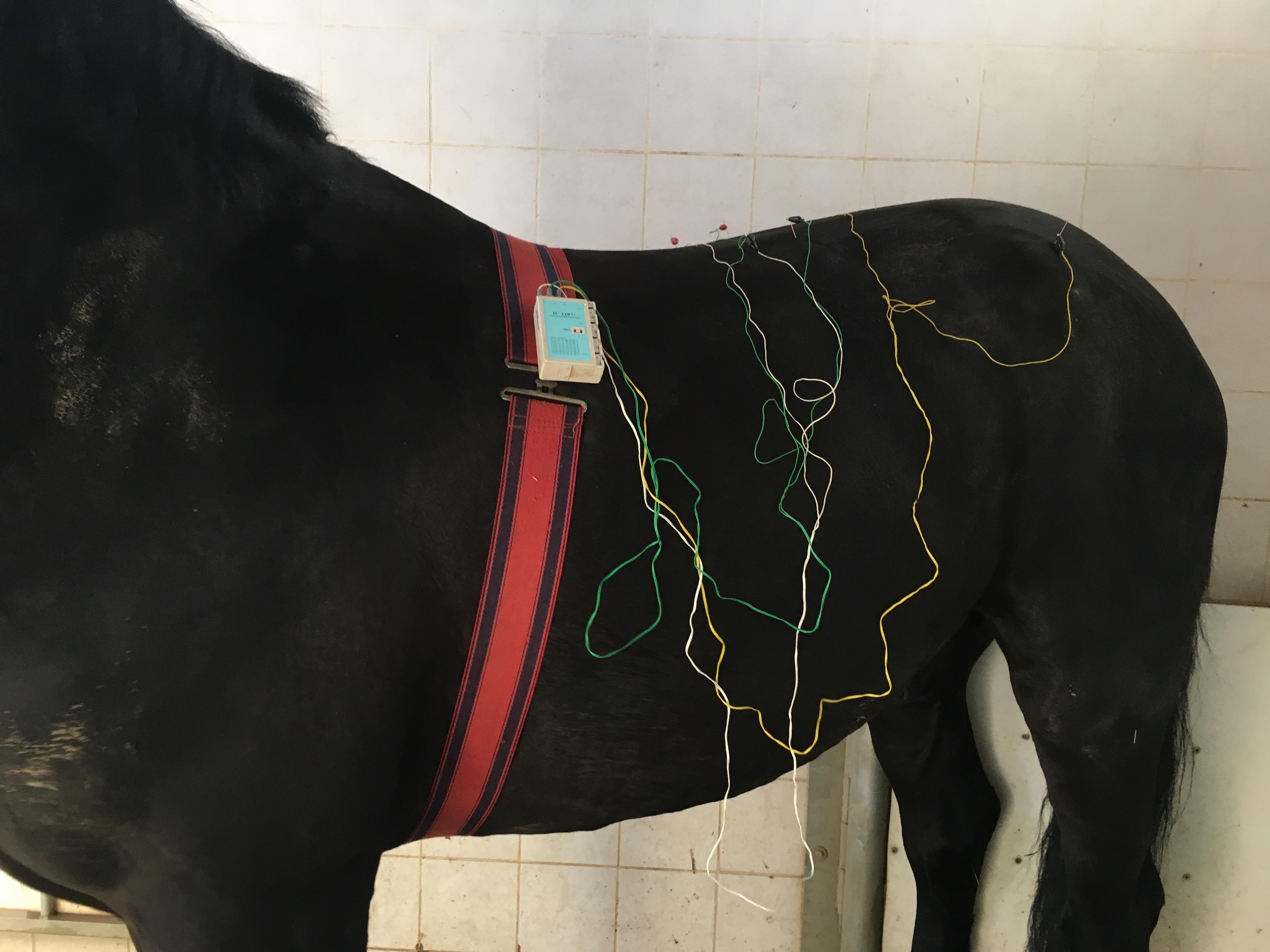 Agopuntura per alleviare i dolori alla schiena