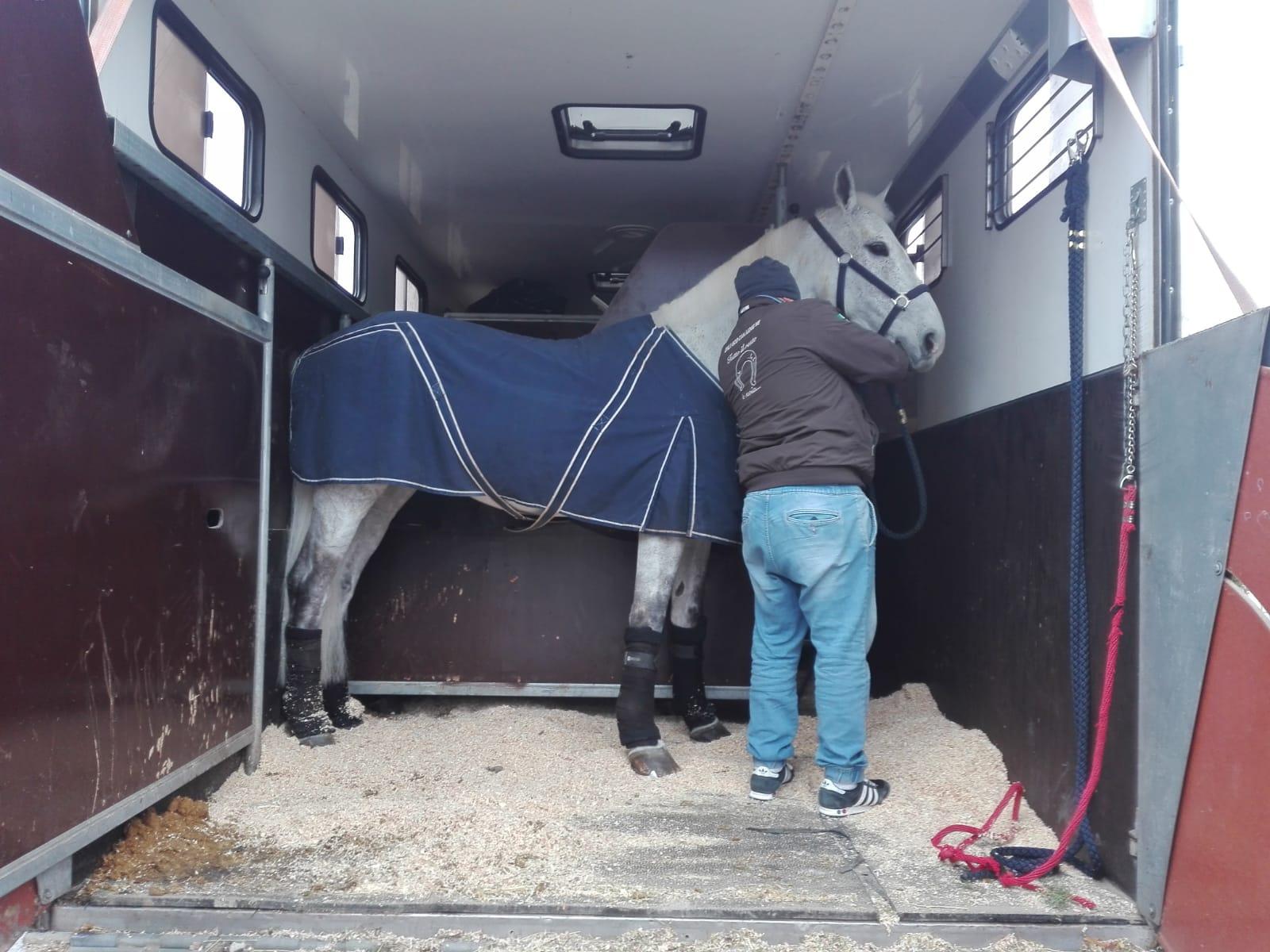 Cavallo sul camion