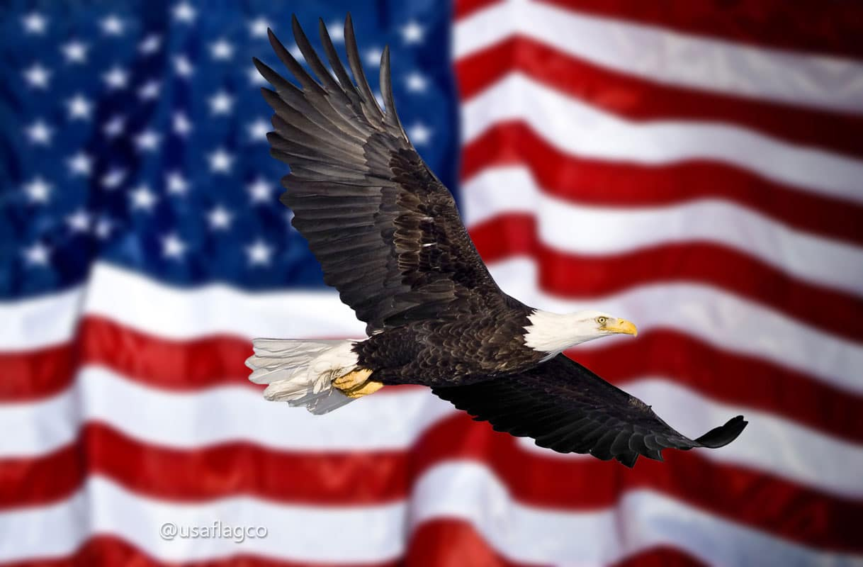 Today, the American bald eagle is protected under the National Emblem Act of 1940