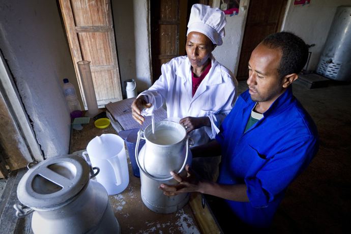 Every morning, farmers drop off milk collected from their dairy cows at one of three collection centers for Ruth and Hirut Dairy in Cha Cha, Amhara, Ethiopia. / CNFA