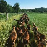 CBF Goat pasture