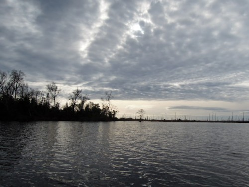 The shoreline of Lake Drummond changes abruptly to reveal a vast burn scar, a remnant of two large wildlifes that have seared the swamp in the past ten years.