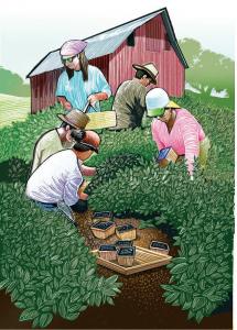 National Children's Center * Hand Harvesting