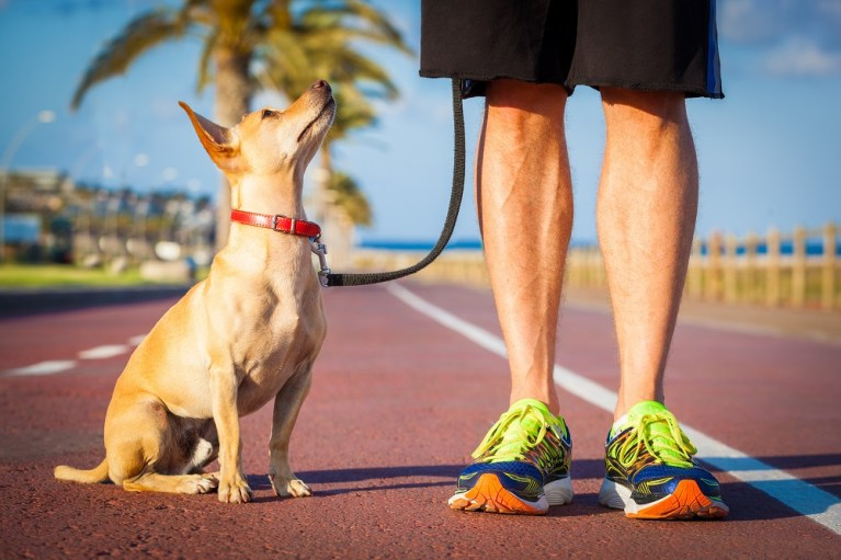 Start your Own Pet Walking Business with uber for Dog Walkers with a Very Little Investment