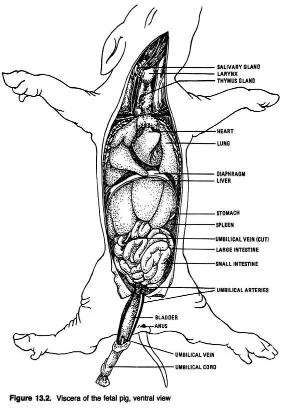 diagram thoracic diagram to label diagram schematic circuit steven Thoracic Body Cavity diagram thoracic diagram to label diagram schematic circuit steven copeland schematic lautschriftmagazin de