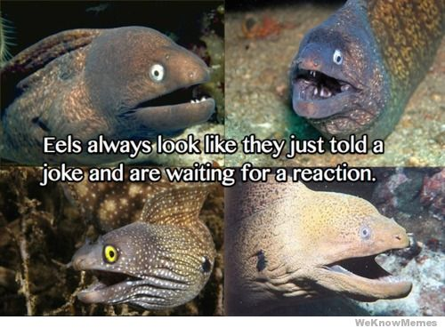 eels-look-like-they-were-told-a-joke