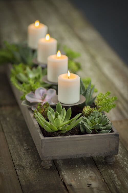 4 Ways To Decorate With Succulents