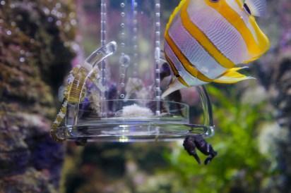 aquarium-paris-2