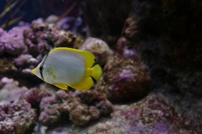 aquarium-paris-4