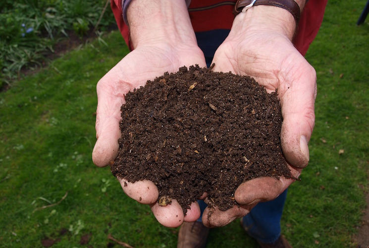 cupped hands holding compost