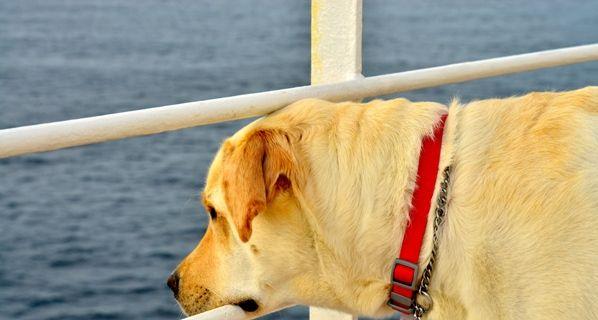 Perro en un crucero