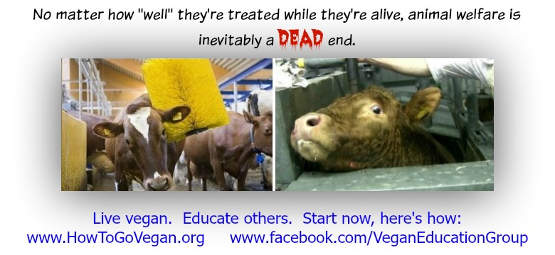 animal-welfare-dead-end-sfveg-poster-001