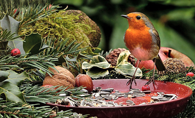 krmitka,ptacci