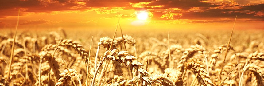 El Nino and the Fate of Agri Commodity Prices - Ventura