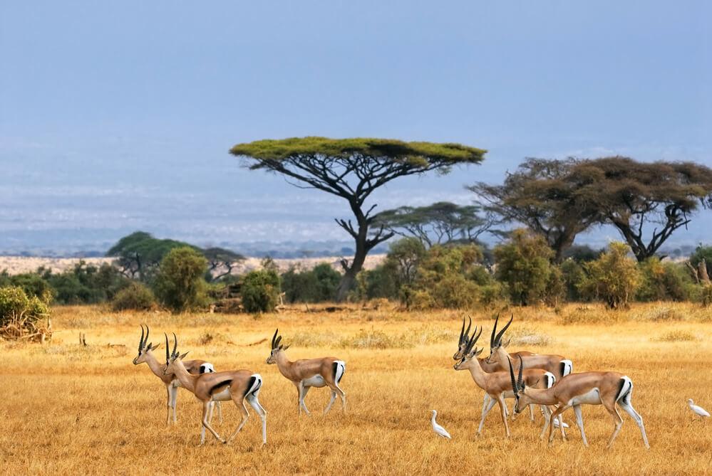 Turismo na África