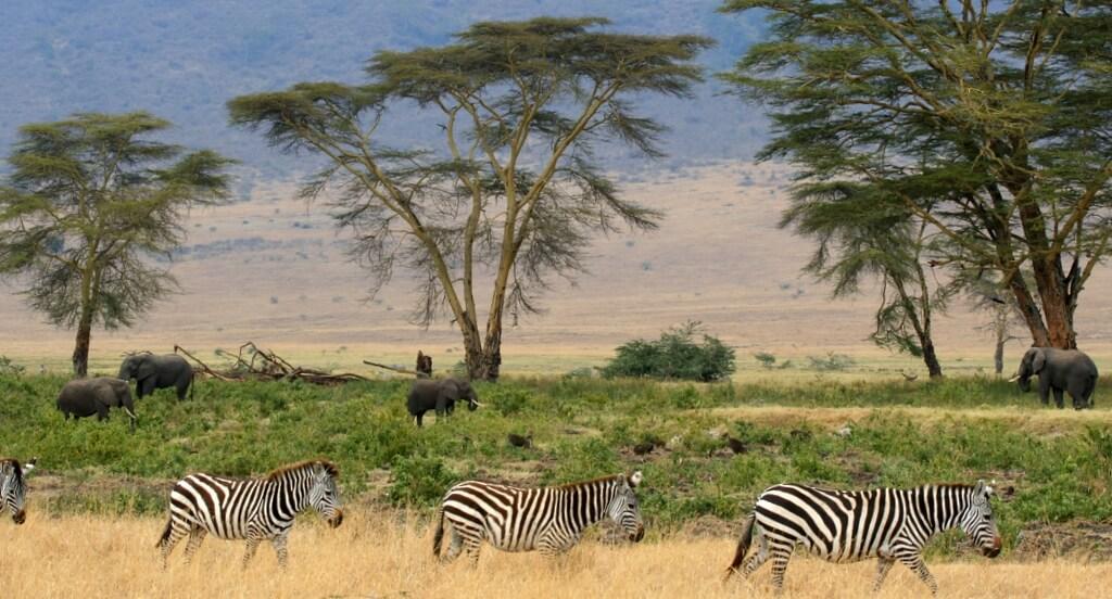 Turismo na áfrica - Tanzânia
