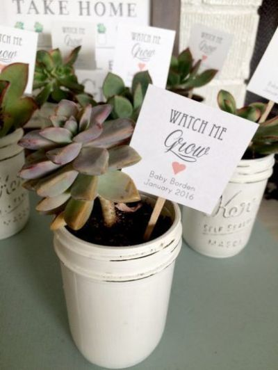 small plants idea for baby shower gift to guests