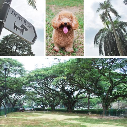 Dogs-birthday-venues-venuerific-blog-katong-park