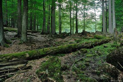 Tierpark Bayerischer Wald aneb přírodní zoo v Bavorském lese