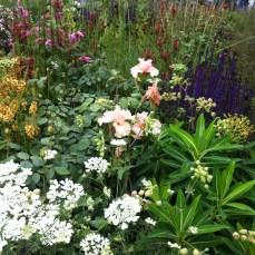 Сад ароматов