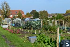 Огород простолюдина в Англии