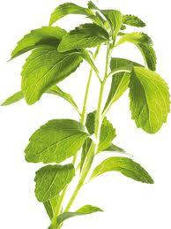 Stevia – das natürlichste und gesündeste Süßungsmittel der Welt