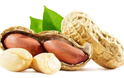 Erdnüsse – Superfood für die Gefässe