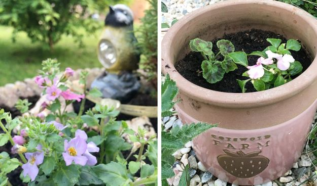 plant pot with Bacopa, a bird solar light and a Cotswold Farm planter with a Busy Lizzie and geranium
