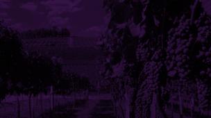 Indicação Geográfica do vinho Brasileiro: confira quais regiões tem