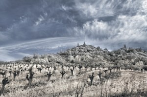 Napa Valley vineyard in the winter in infrared.