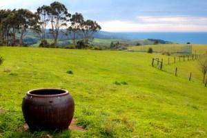 Landscape of Mclaren Vale, south Australia