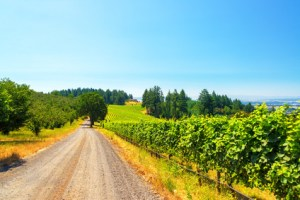Vineyard in Rural Oregon