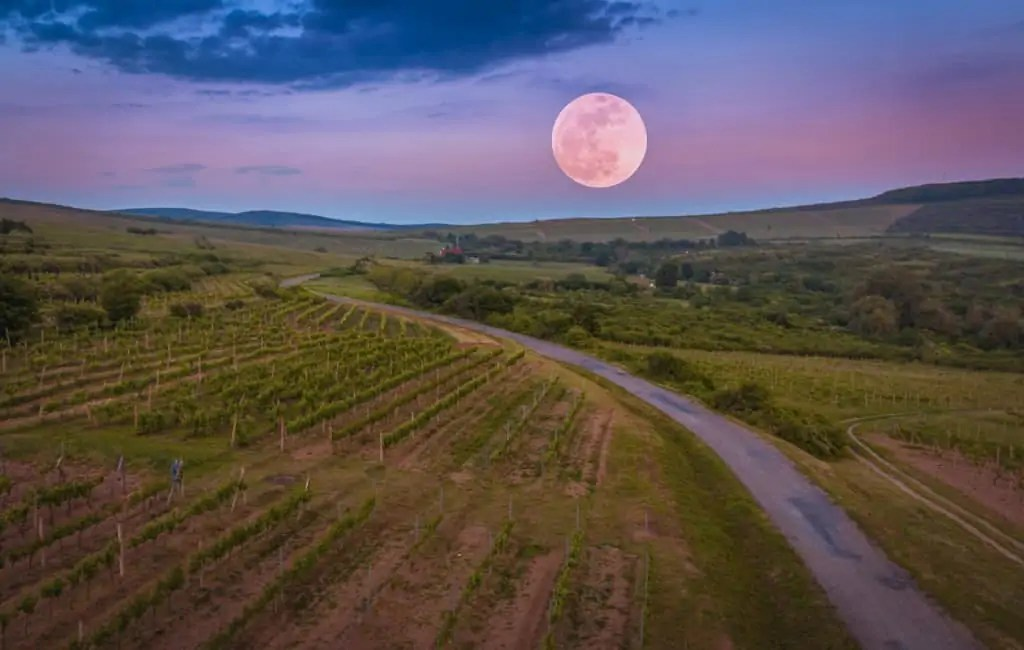 tasting wine by moon phases
