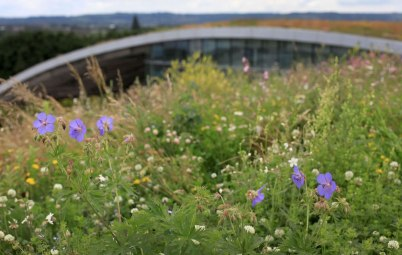 Wildflower Roof