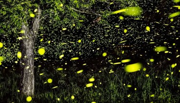Chinese Firefly Park