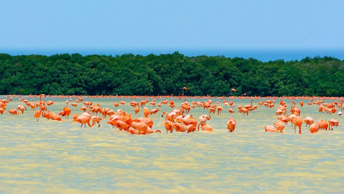 Mar Rosa en Yucatán